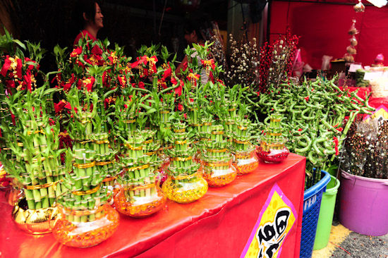 Chinese New Year plants