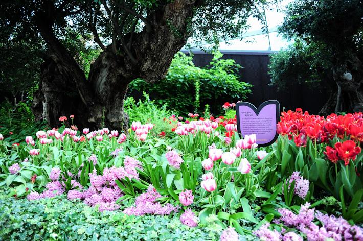 Tulip Garden Singapore