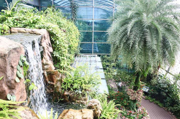 Changi Airport Butterfly Garden