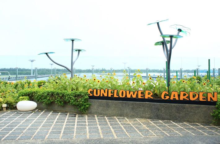 Changi Airport Sunflower Garden