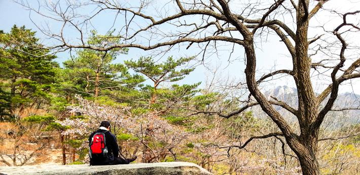 Seoul Adventures