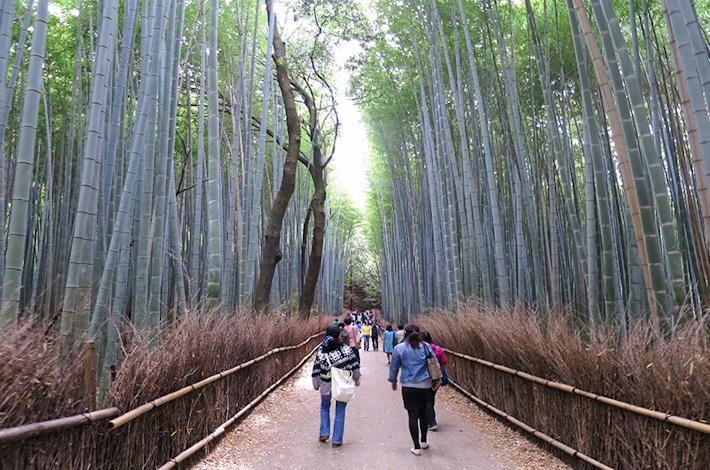 Arashiyama 24 Hours Guide
