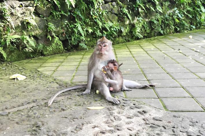 Scared Monkeys