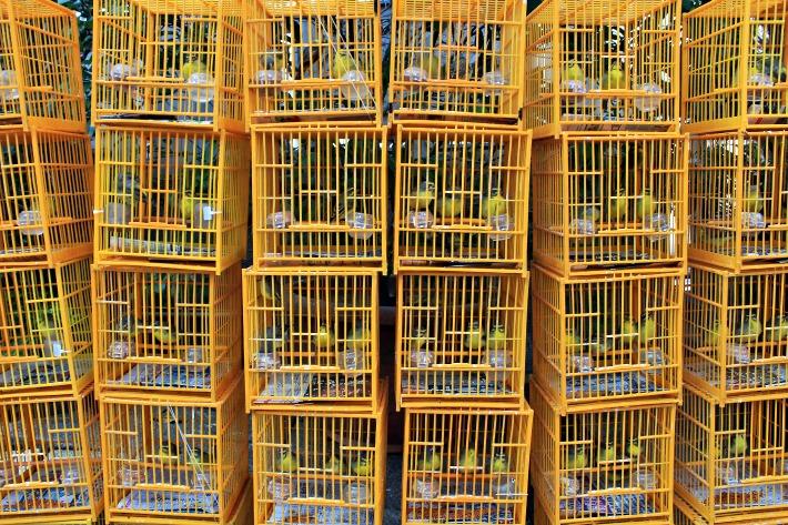 HongKong-Bird-Garden