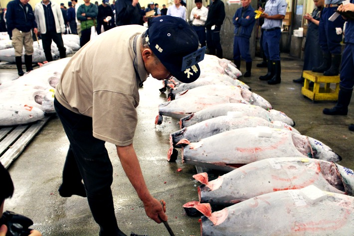 Tuna-Auction-Japan