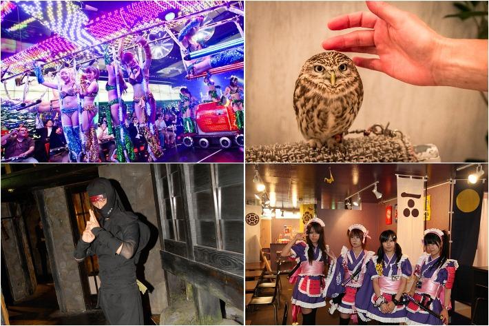 Japan's Strangest Cafes Collage