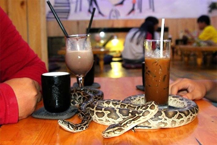 reptile cafe