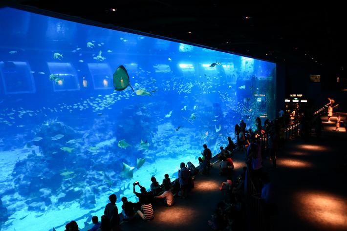RWS Sea Aquarium