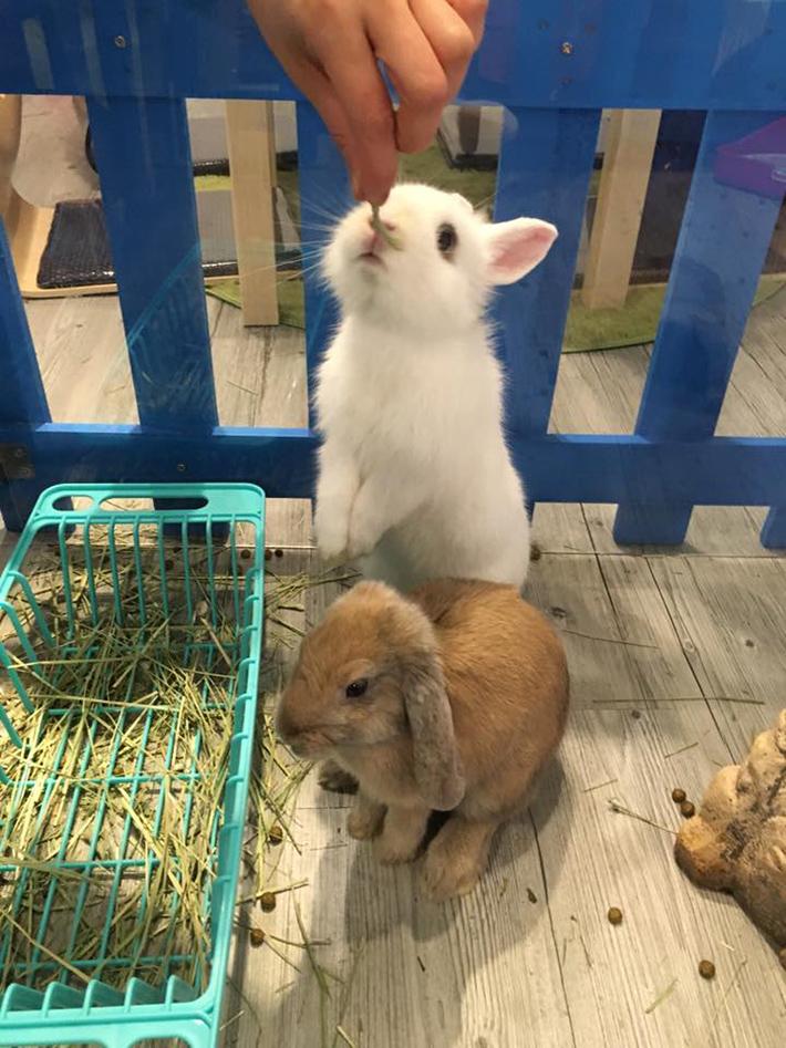 rabbitland cafe hongkong