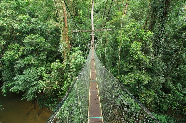 Mulu National Park Canopy Walk