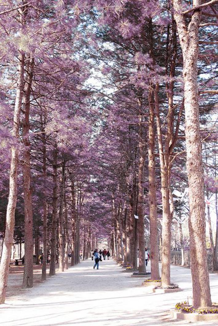 Nami Island Chuncheon