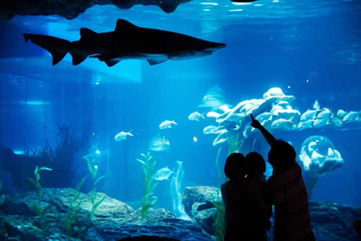 SEA LIFE Aquarium Busan