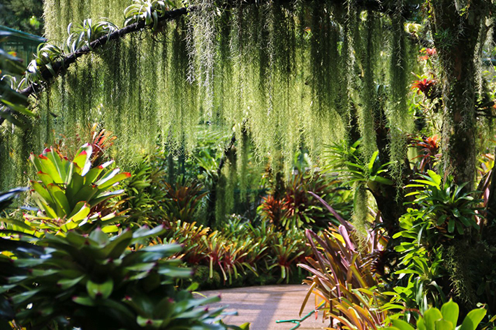 Singapore-National-Orchid-Garden