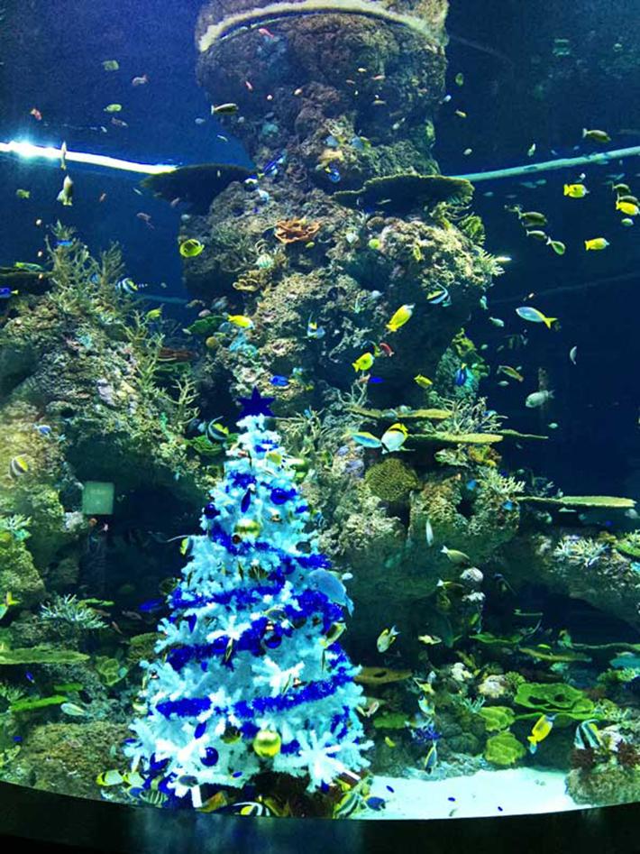 Merry Fishmas SEA Aquarium