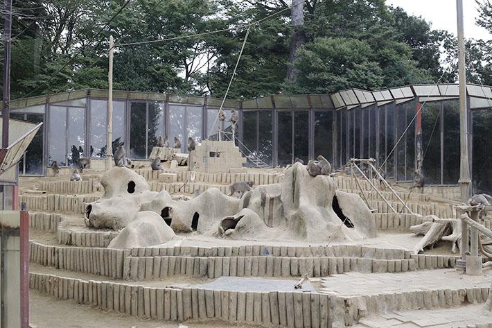 Mount Takao Monkey Park