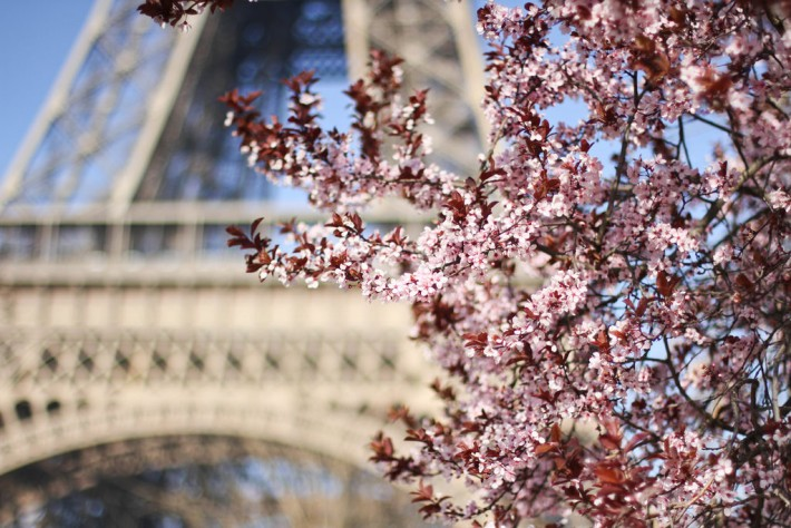 Champ de Mars Cherry Blossoms