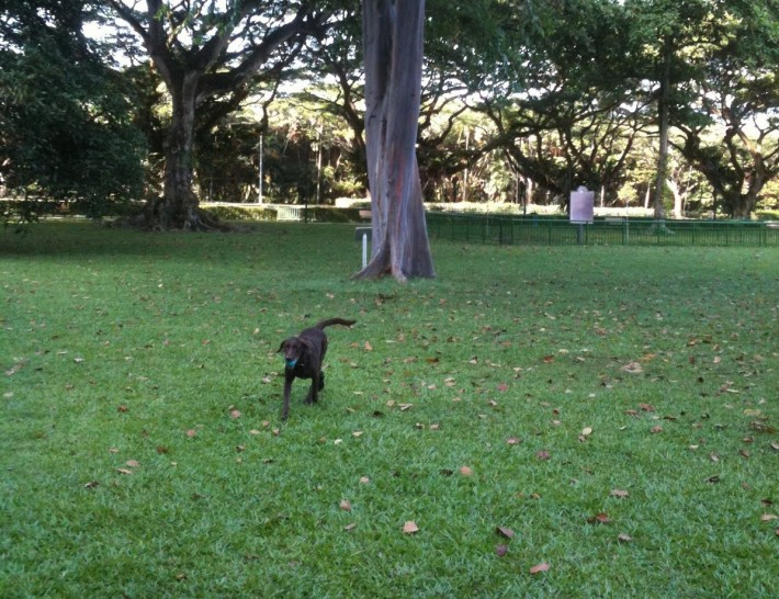 Katong Park Dog Run