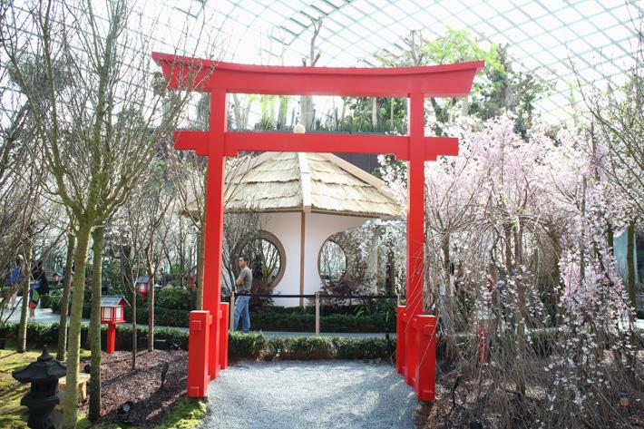 Cherry Blossom Tori Gate
