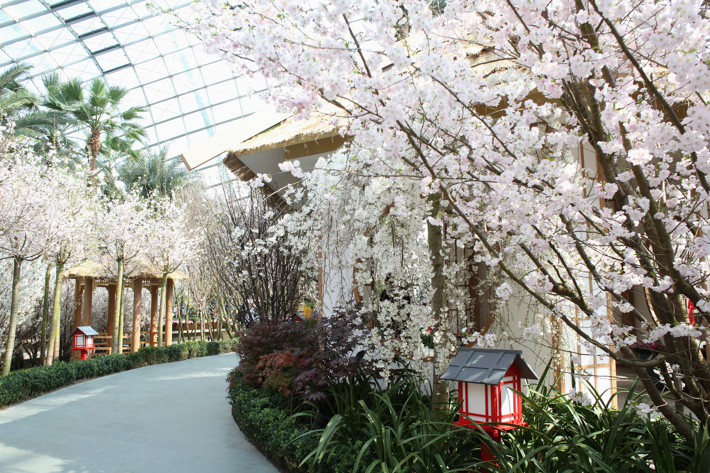 Cherry Blossoms Pathway 2