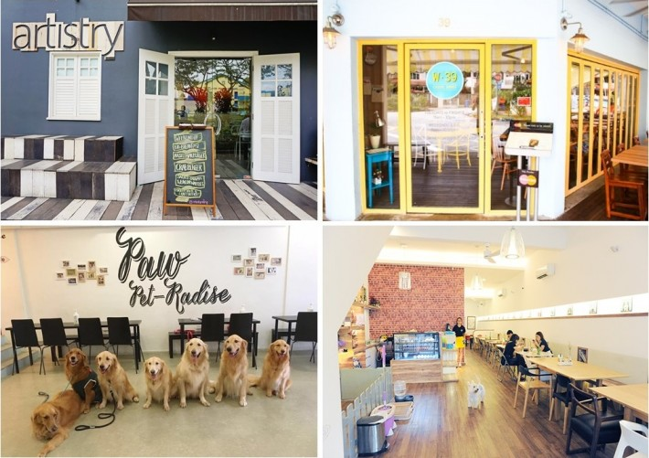 Dog-Friendly Cafe Cover Photo