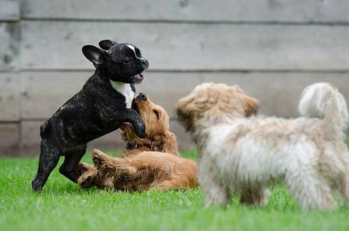Barks & Kisses