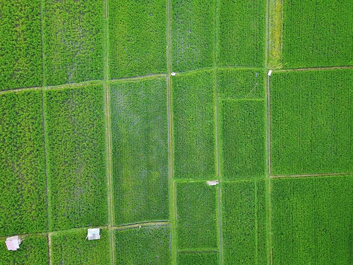 Bali Paddy Field