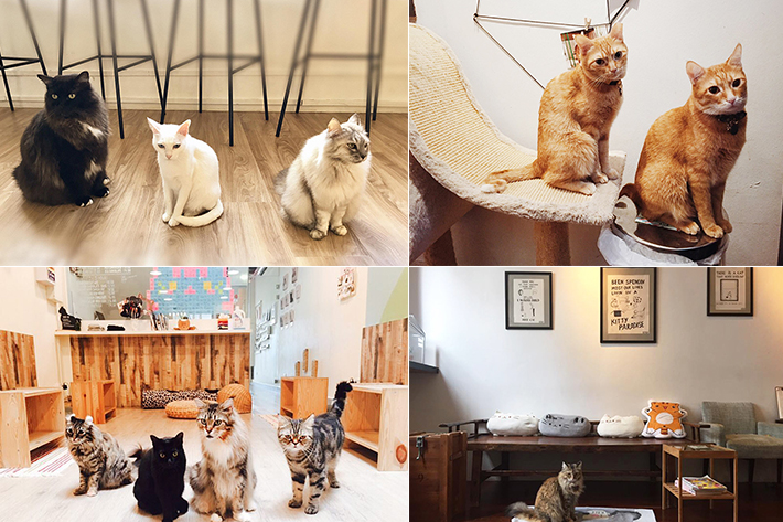 Cat Cafe Collage