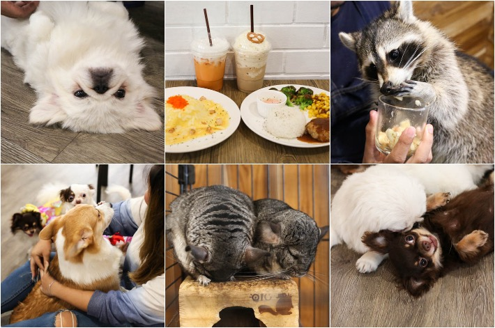 Little Zoo Cafe BKK