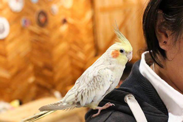 Little Zoo Cafe Parakeet