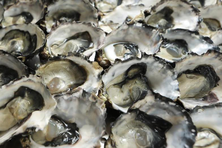 The Beacon Oysters