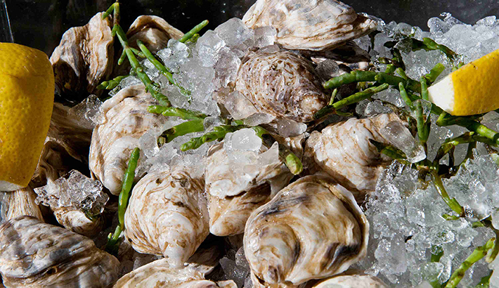 db Bistro oysters