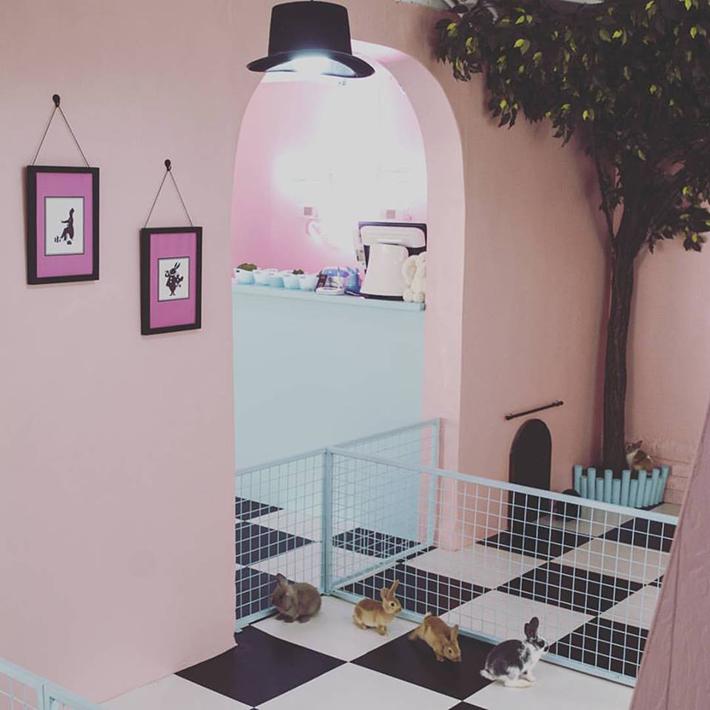 Bunny Cafe Hongdae
