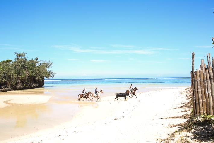 Ecotrax horses