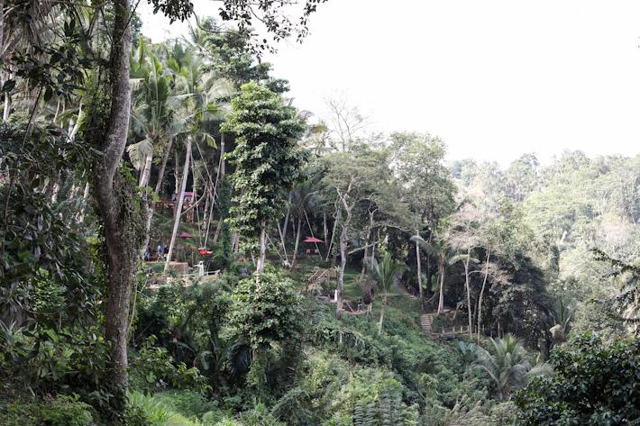 Bali Swing View