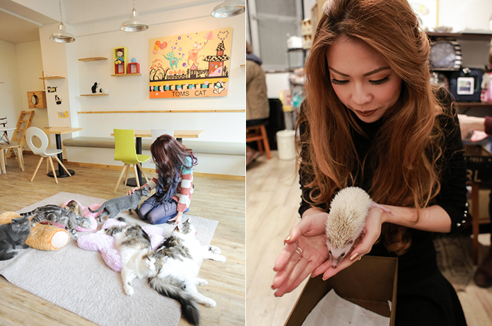 Pets Cafe