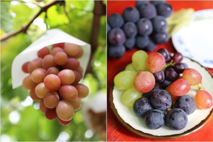Shirone Grape Garden Niigata