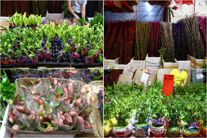 Festive Plants CNY Chinatown