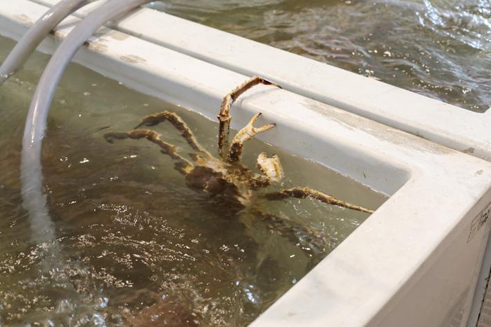 Shinsen Fish Market Crab