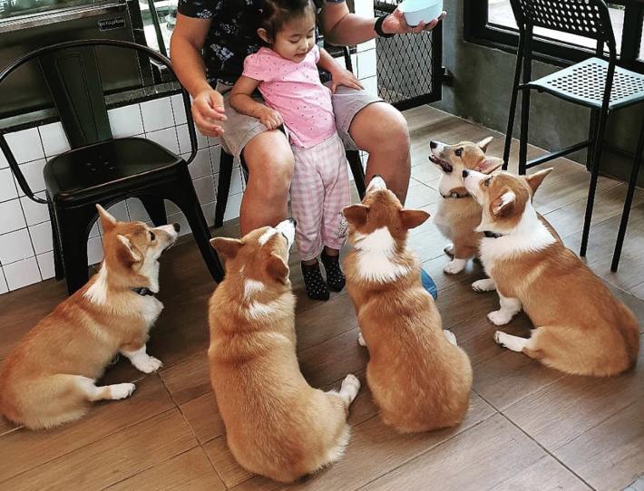 corgi-in-the-garden-corgis-and-kid-