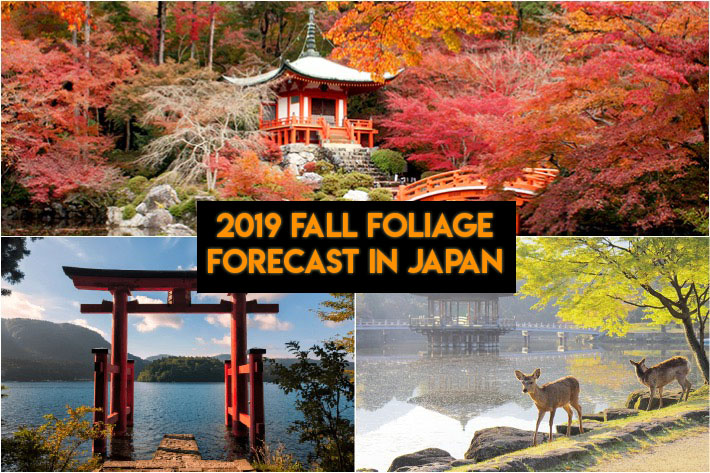 2019 Japan Fall Foliage Collage