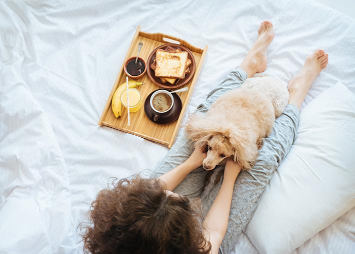 Dog Friendly Hotels - Amara