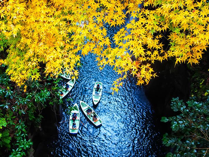 Kyushu Fall Foliage