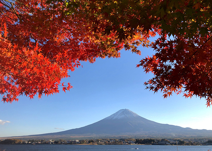 Mount Fuji Fall Foliage