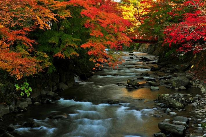 Shizuoka Fall Foliage