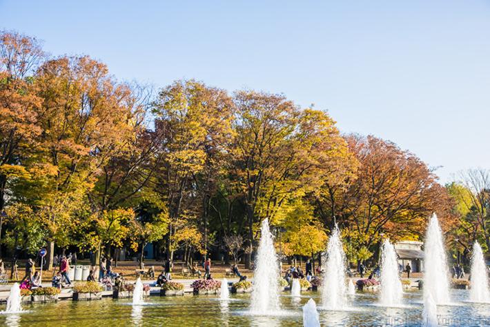 Tokyo Fall Foliage