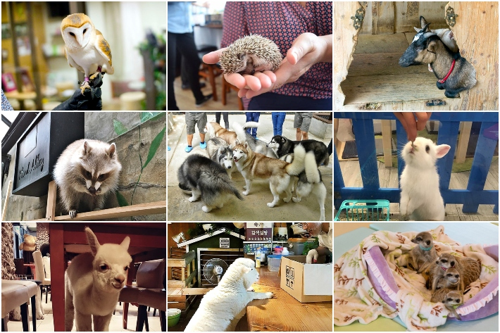 ANIMAL CAFE COLLAGE