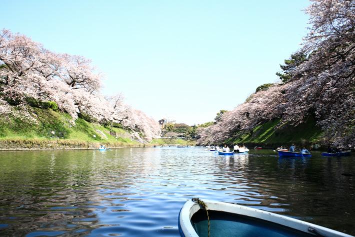 Cherry Blossom Row Boat