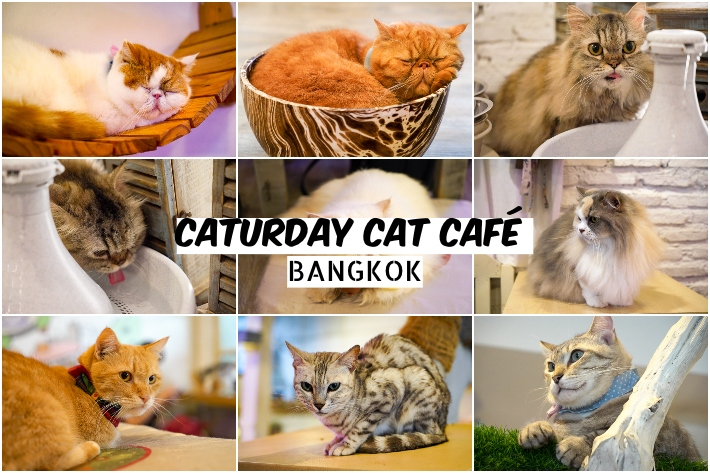 caturday cafe collage