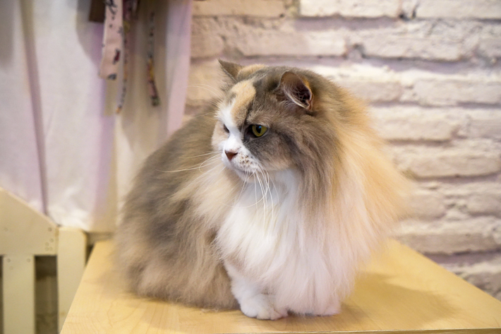 caturday poofy
