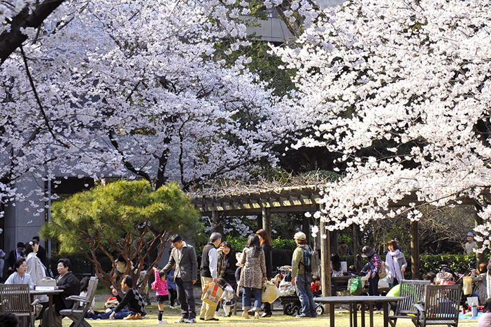 2020 Sakura Forecast Hiroshima